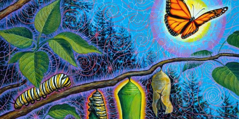 Our World is in Transition - From Caterpillar to Butterfly