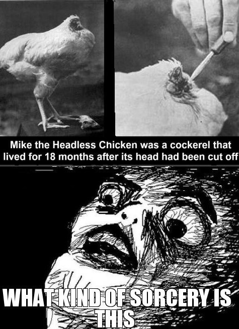 craziness of life - don't follow the headless chicken